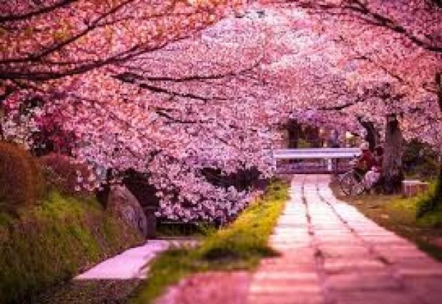 Chia sẻ về bốn mùa ở Nhật Bản