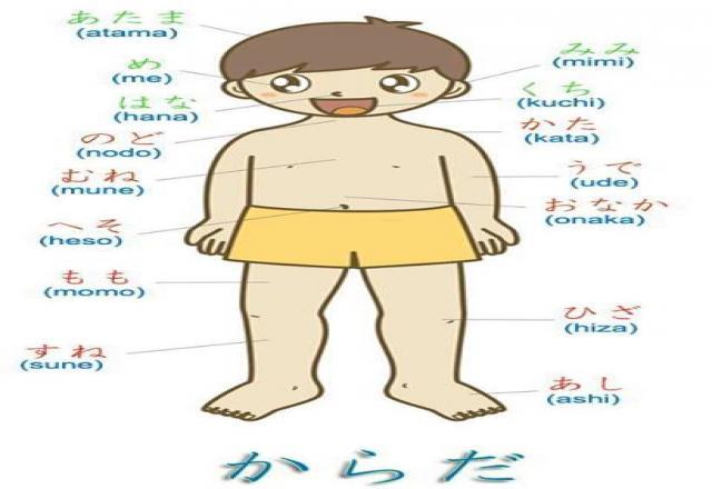 Từ vựng tiếng Nhật theo chủ đề bộ phận trên cơ thể người