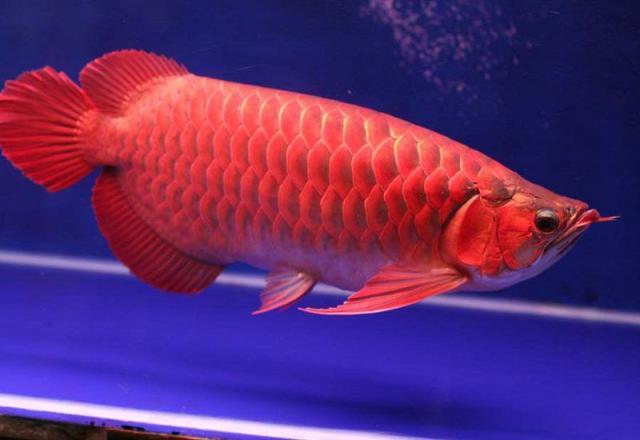 Cùng SOFL học tiếng Nhật về chủ đề các loại cá